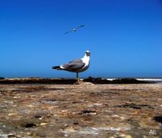 12. Essaouira