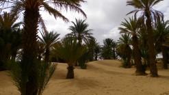 desierto. palmeral. Zagora